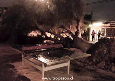 Ventarrón derriba árboles y deja 23 mil casas sin energía eléctrica en Pudahuel