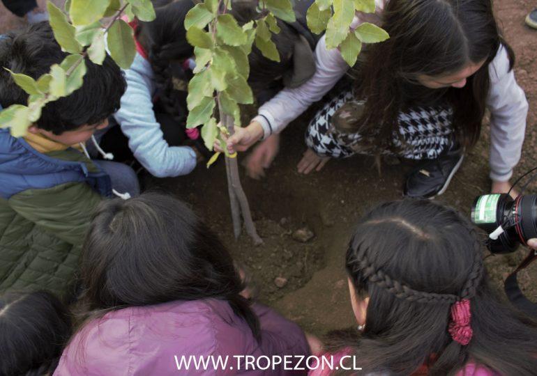 Niños y niñas plantan árboles para expresar descontento por construcción de edificios