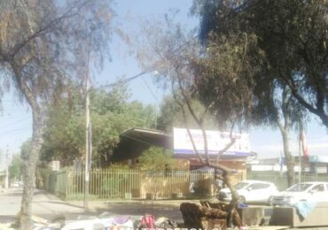 Tres árboles resultaron dañados por quema de desechos en bandejón de Teniente Cruz al llegar a JJ. Pérez.