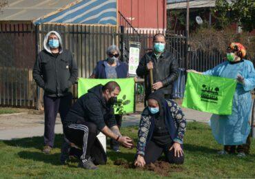 Pudahuel Despierta planta árboles nativos en la comuna